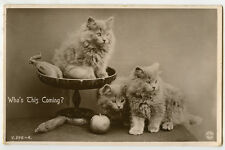 New listing 1930s British Cute Fluffy Kittens Long Hair Cat vintage photo postcard