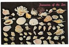 Vintage Florida Chrome Postcard Seashells Treasures of the Sea Collection Shells