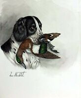 "Jean Herblet French Artist 17""x13"" Original Watercolor Springer Allemand, Wigeon"