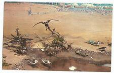Rochester NY Manitou Beach Shore Birds Vintage Postcard