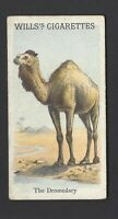 WILLS - ANIMALS & BIRDS - THE DROMEDARY