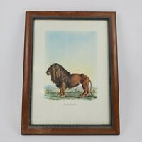 Vintage Lion De Barbarie by Frederic Cuvier Animals of Africa Art Print