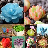 80pcs Seeds Mixed Succulents Rare Plant Flower Office Home Garden Pot Decor