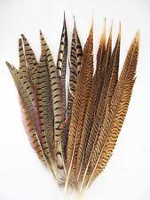 Pheasant Tail Feathers Decorator Mix 10-15 inch per Dozen