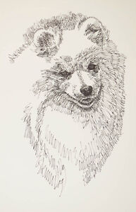 American Eskimo Dog Breed Print #32 Kline MAGIC ART DRAWN FROM WORDS eskie GIFT
