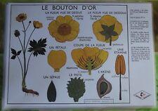 Création Affiche scolaire Set de Table Rossignol le Bouton d'Or Format A3