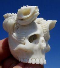 Cranio con LEGUAN-SCHELETRO SKULL da CORNO SCOLPITO Memento Mori miracolo Camera