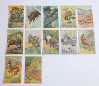 1920's D12 Armstrong's Bread Beautiful Animals Lot of 12 different