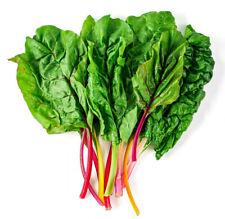 100 Rainbow Swiss Chard Non-GMO Heirloom Vegetable Seeds   Garden or Microgreens
