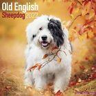 Old English Sheepdog Calendar 2022 Dog Breed Wall Calendar 15% OFF MULTI ORDERS!