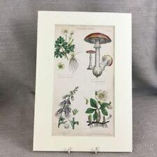Dealer or Reseller Listed Traditional Botanical Art Prints