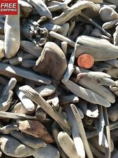 "50+pieces tiny Ocean Driftwood, 3/4"" to 4"" Natural Calif. ocean beach wood"