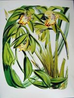 Original Old Vintage Print C1979 Orchids Flowers Cymbidium Hookerianum Yellow