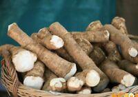 Root Katran (horseradish) steppe Accord Seeds Heirloom Vegetable