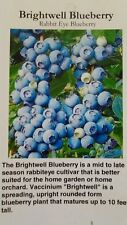 4'-5' Brightwell Blueberry Plant Live Plants Minerals New Healthy Blueberries