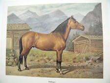 Pferdebild HAFLINGER LANDPFERD SHIRE KLADRUBER ANDALUSIER LANDPFERD O. EERELMAN
