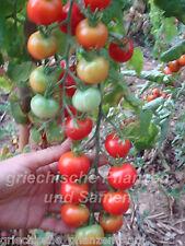 MESSEIG Honigtomate Tomate 10 Samen alte Sorte SEHR SELTEN Tomaten samenfest
