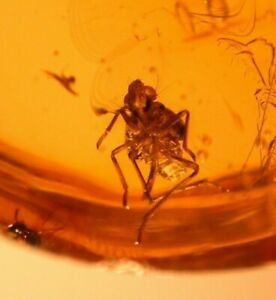 Beautiful Planthopper Nymph, 3 Flies, Wasp in Dominican Amber Fossil Gemstone