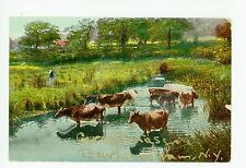 """Town I Go to For a Drink"" Burlingham NY Cows Wading in Marsh—Antique PC 1909"