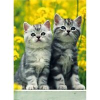 Cute 2 Tabby Kittens Cat greetings card blank birthday yellow flowers kitten