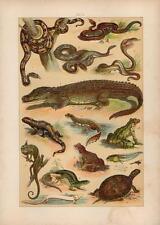 1891 HAUFE CHROMO rattlesnake, cobra, crocodile, tortoise, frog, toad, chameleon