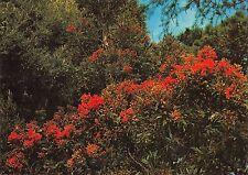 BR89598 the red gum tresco gardens isles of scilly  scotland