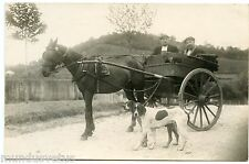 CARTE PHOTO. ATTELAGE. CHEVAL. CHIEN. HITCH. HORSE. DOG. PHOTO CARD