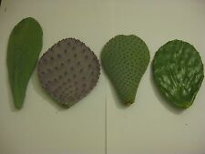 Prickly Pear CACTUS Pads: 4 Variety Pack