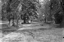 More details for woodland path antique photographic glass negative (nature countryside park)