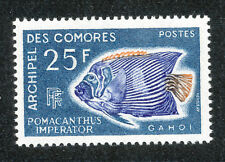 COMORES # 48 - FAUNE Poisson-ange Empereur - 1968