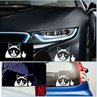White Grumpy Cat For JDM Auto Car/Bumper/Window Vinyl Decal Sticker Decals Funny