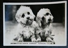 Dandie Dinmont      Superb Vintage Photo Card  # Unmounted