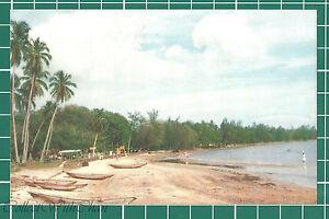(CWC) Malaya 1950s/1960s Port Dickson Beach Postcard #3328 Near Mint