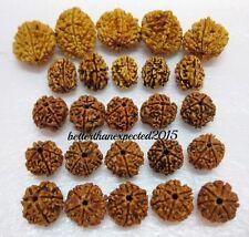 Natural 2,3,4,5,6 Mukhi (Face) Rudraksh Rudraksha (Big lot 25 pieces)~Energized