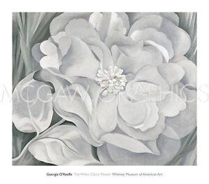 "O'KEEFFE GEORGIA - THE WHITE CALICO FLOWER, 1931-ART PRINT POSTER 30"" x 34""(315)"