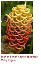 x 25 RARE SQUELETTE fleur graines de fleurs semences RARE en de Plant rarité #93