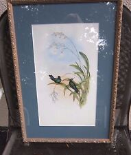 Framed Lithograph Gould & Richter, Hullmandel & Walton Hummingbirds, Thalurania