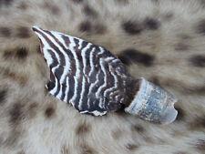 Zebra Hoof - real/africa/hide/rug/mount/giraffe/hyena/antelope/horn/skull/rare