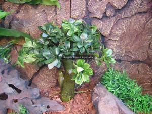 Realistic Artificial Fake Plant 40cm Reptile Snake Plastic Silk Stump ZJW-033