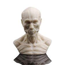 Human Bust Sculpture Statue Resin Sketch Draw Plaster Cast Artist Model Decor