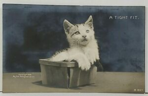 RPPC Kitten A TIGHT FIT Kitty in a Berry Basket Real Photo 1906 Postcard K19