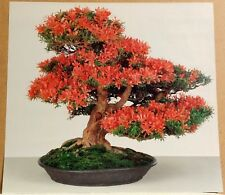Bonsai Red Satsuki Azalea Art Photographic Color Print Poster