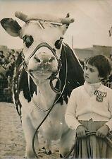 """PARIS 1957 - Fillette et """"Languette"""" Vache Normande """"Championne"""" - PR 536"""