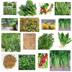Thai vegetable,herb, SEEDS -aubergine, chilli, basil, rice, culantro, kale,gourd