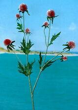 Distelstrauch rot Kunstblumen -Seidenblumen -künstliche Blumen-Deko