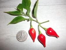 25+ Fresh Heirloom Pimenta de Bico/Biquinho/Chupetinha Pepper Seeds