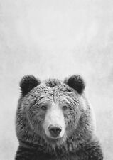 BROWN BEAR * Large A3 SiZE  QUALITY CANVAS PRINT