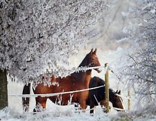 METAL FRIDGE MAGNET Two Horses In Field Of Snow Winter Horse