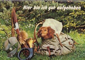 Tiere: Ein gut verpackter Dackel ngl G5326