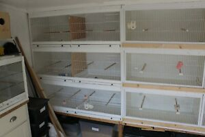 Budgie breeding cages and aviary panels